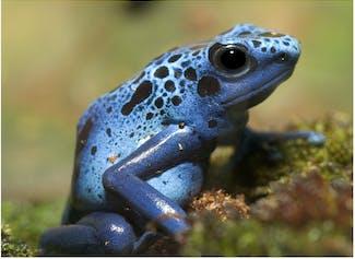 I can describe the characteristics of amphibians.