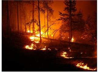 I can explain how to stay safe during a wildfire.