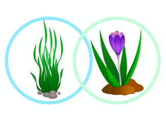 I can explain how the adaptations in water plants help them survive.