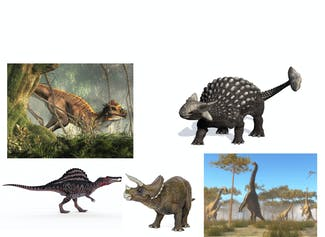 I can name and describe different dinosaur types.
