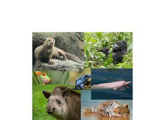 I know about the animals of the rainforest.