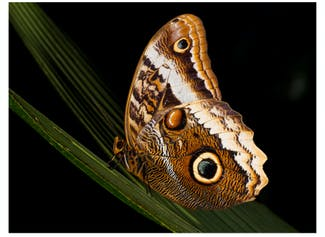 I can recognize and understand camouflage and mimicry as types of adaptations in