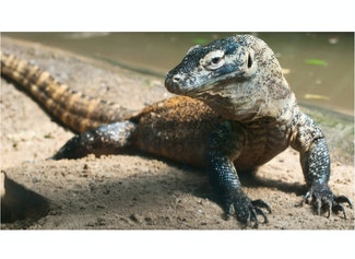 I can describe a reptile by its characteristics.