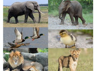 I can explain how young animals are alike and unlike their parents.