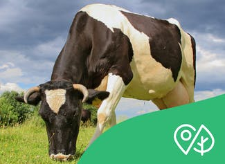 Learn about agriculture and some of the environmental problems it creates.