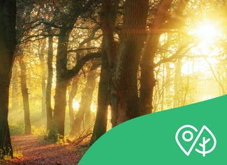 Learn why trees are important for us and the environment.