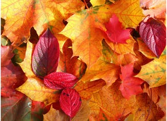 I can describe fall/autumn and make observations about the season.